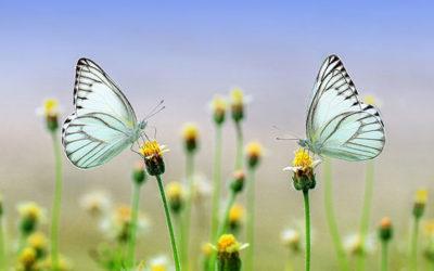 Les bases de la psychologie humaniste et transpersonnelle